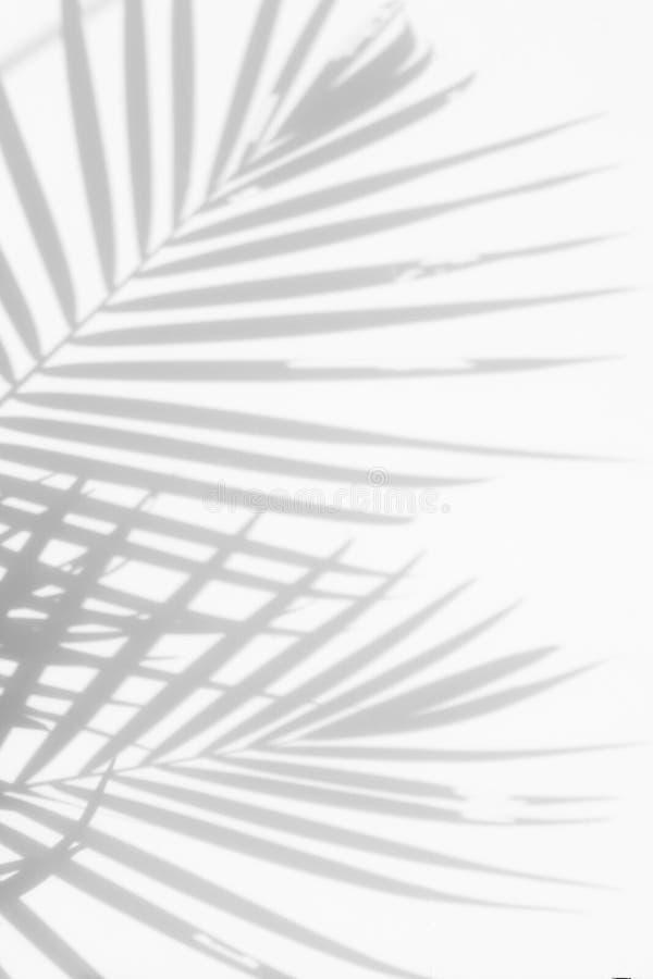 Fondo abstracto de las hojas de palma de las sombras en una pared blanca imagenes de archivo