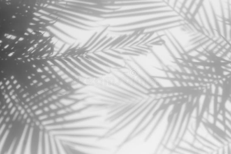 Fondo abstracto de las hojas de palma de las sombras en una pared blanca imagen de archivo