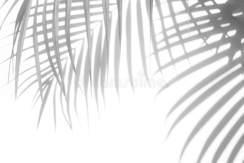 Fondo abstracto de las hojas de palma de las sombras en una pared blanca fotos de archivo