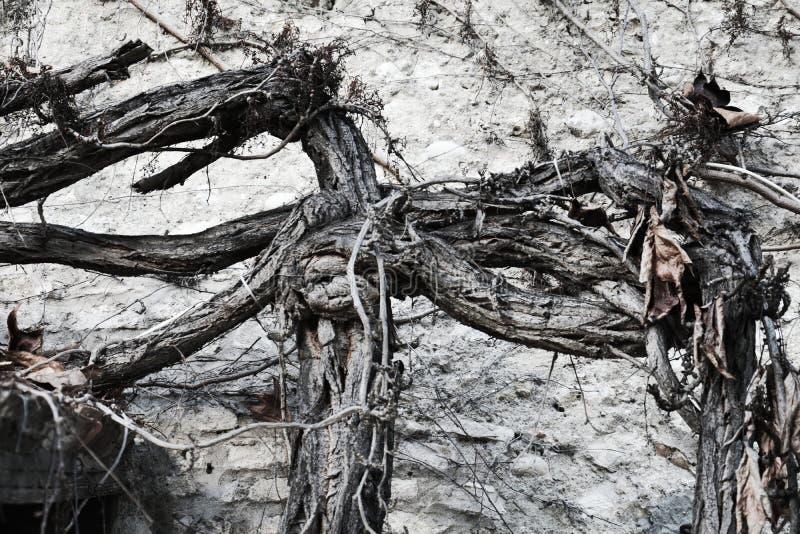 Fondo abstracto de madera en las tonalidades blancas y negras foto de archivo libre de regalías