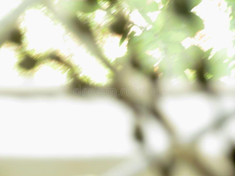 Fondo abstracto de ramas verdes en la ventana fotos de archivo libres de regalías
