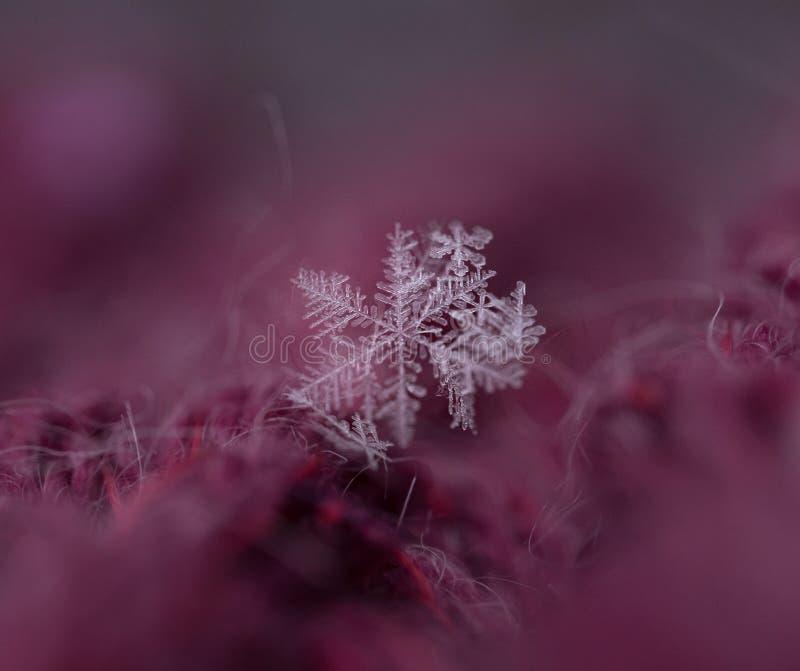 fondo abstracto del bokeh de la textura macra del primer del copo de nieve imágenes de archivo libres de regalías