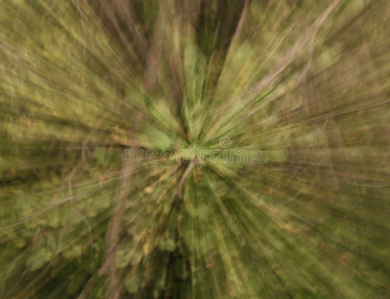 fondo abstracto verde intencionalmente borroso fotografía de archivo