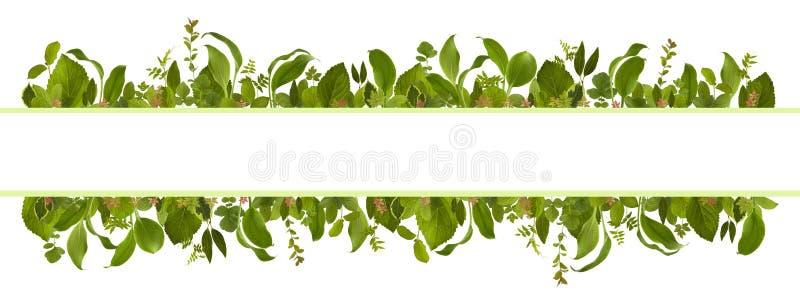 Fondo adorable del prado de la hoja de la selva del jardín imagen de archivo libre de regalías