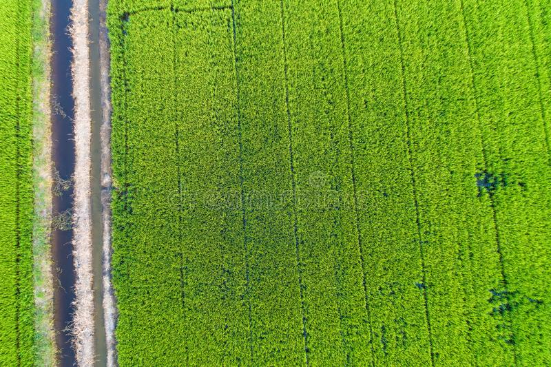 Fondo aereo di verde del colpo del terrazzo del risone fotografia stock