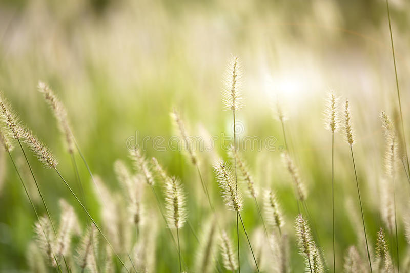 Fondo agradable fresco de la hierba verde fotos de archivo libres de regalías