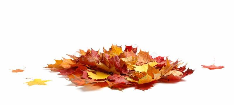 Fondo aislado del blanco de las hojas de otoño fotos de archivo libres de regalías