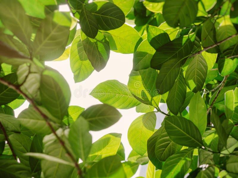 Fondo all'aperto della natura della foglia del parco verde di luce solare immagine stock libera da diritti