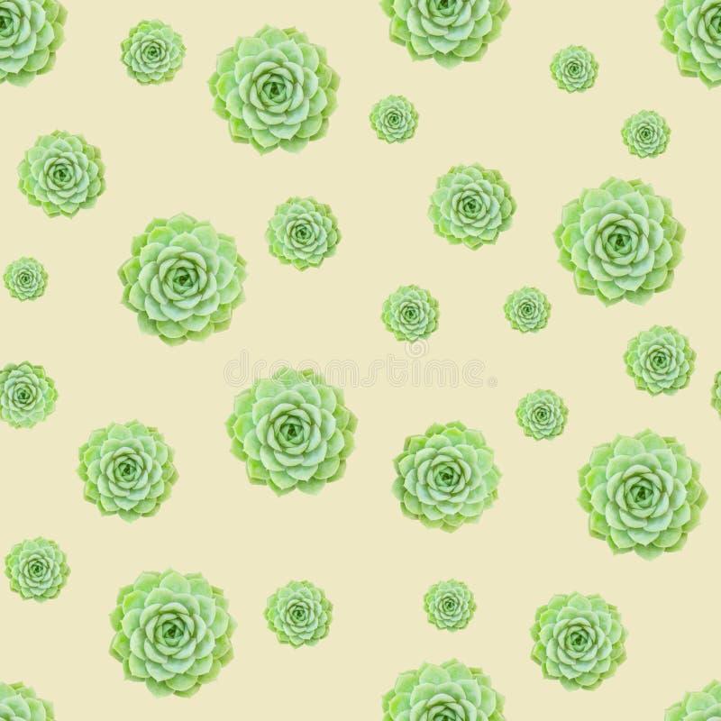 Fondo amarillo claro del modelo suculento verde de la planta fotografía de archivo