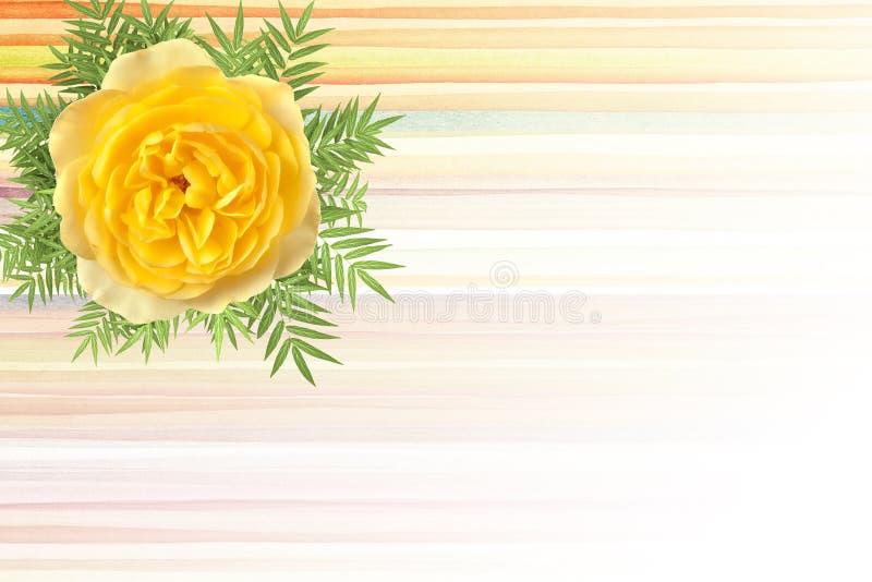 Fondo amarillo de la flor para su texto foto de archivo