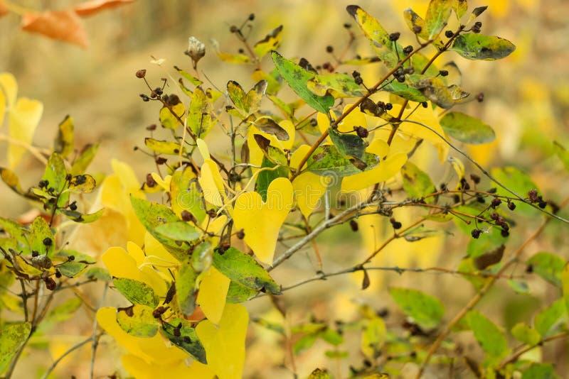 . Fondo amarillo y rojo borroso foto de archivo