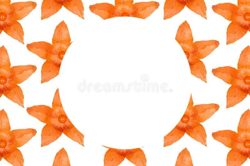 Fondo anaranjado del modelo del physalis, endecha plana con el espacio de la copia libre illustration