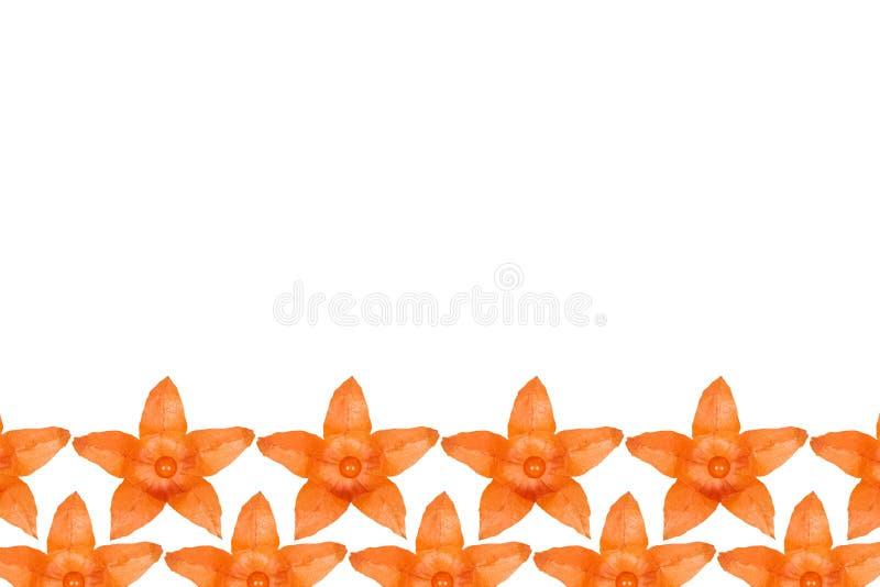 Fondo anaranjado del modelo del physalis, endecha plana con el espacio de la copia stock de ilustración