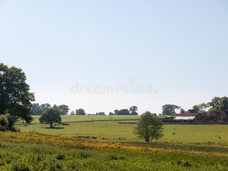 fondo aperto del paesaggio del pascolo fertile dell'erba verde del campo dell'azienda agricola fotografia stock libera da diritti
