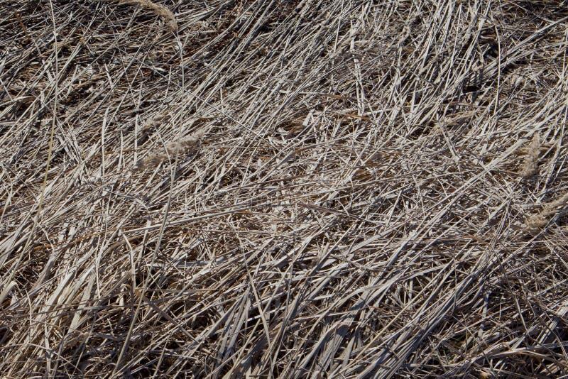 Fondo appassito dell'erba fotografia stock libera da diritti