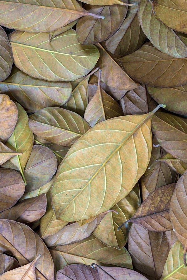 Fondo appassito delle foglie fotografie stock libere da diritti