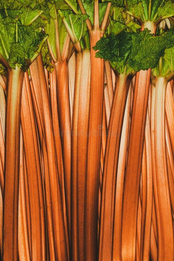 Fondo arancio completo del rabarbaro rheum Macro