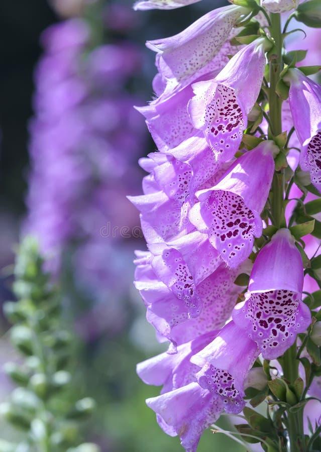 Fondo asombroso de la flor en el festival de las flores fotos de archivo libres de regalías