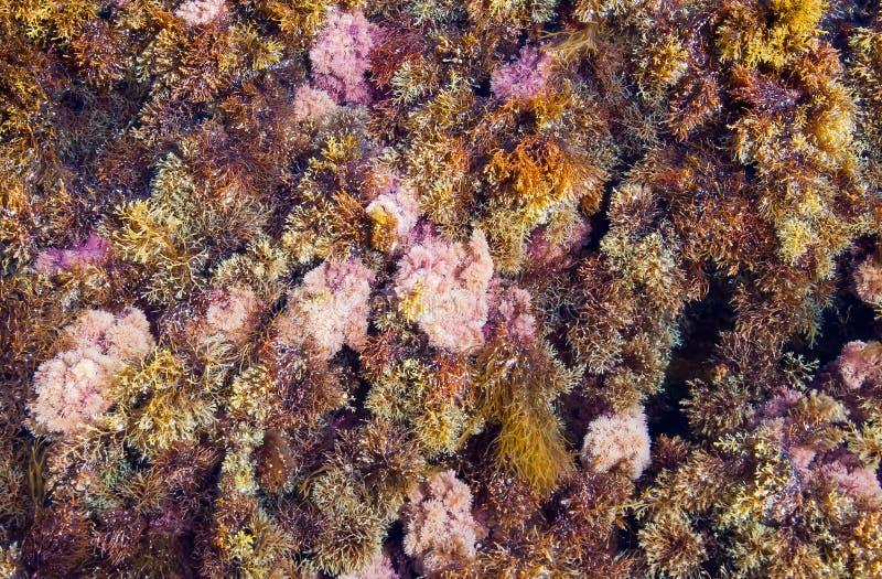 Fondo astratto - alga di erbe multicolore sulla spiaggia fotografia stock libera da diritti