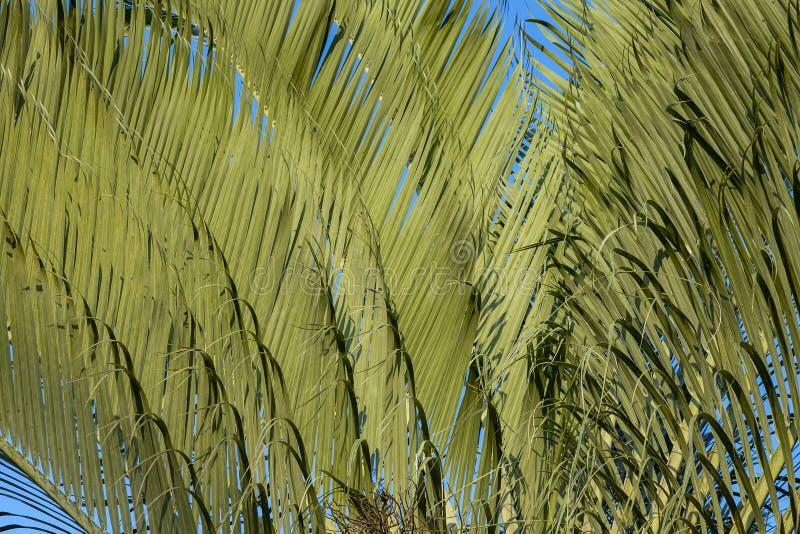 Fondo astratto con la palma La struttura di foglia di palma verde Forme in natura fotografia stock libera da diritti