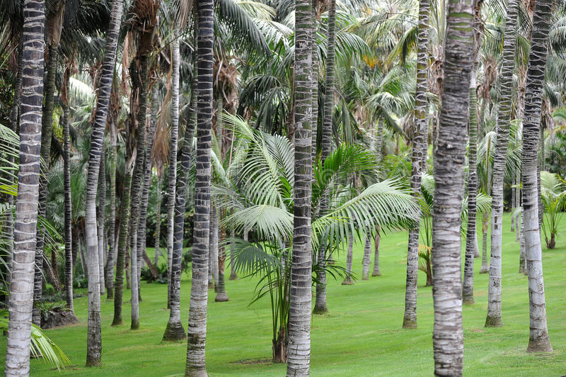 Fondo astratto dai tronchi della palma immagine stock