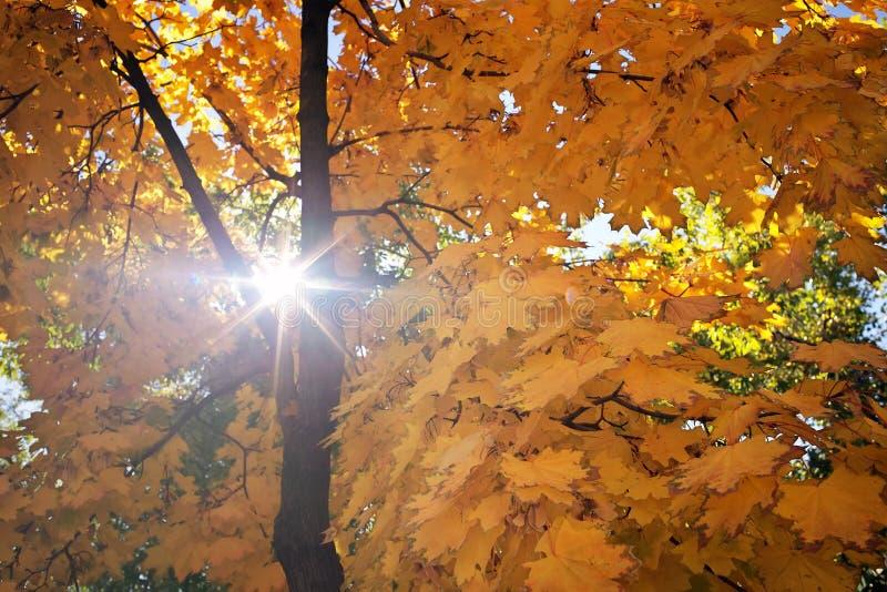Fondo astratto del fogliame, bello ramo di albero in autunno immagini stock