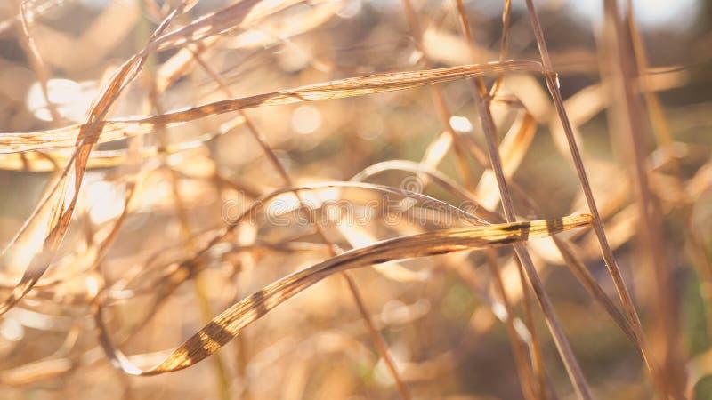 Fondo astratto della natura con sfuocatura ed erba, neve e sole fotografie stock libere da diritti