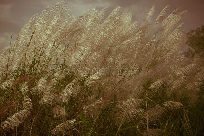 Fondo astratto della natura dei fiori in primavera e dell'estate fotografia stock