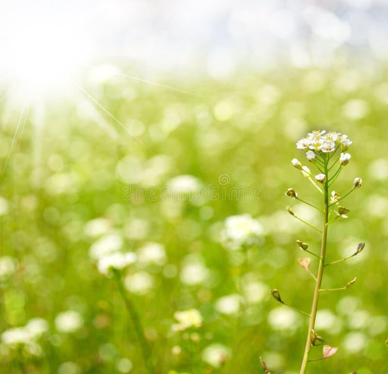 Fondo astratto della natura di estate o della primavera immagine stock libera da diritti