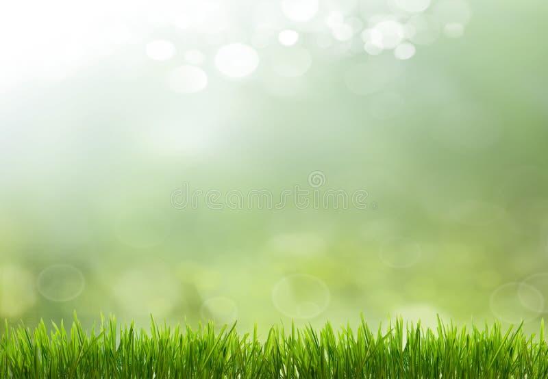 Fondo astratto della natura di stagione estiva o della primavera immagini stock