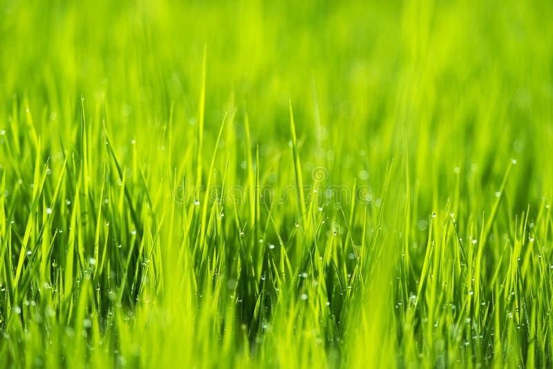 Fondo astratto della natura di stagione estiva o della primavera immagini stock libere da diritti