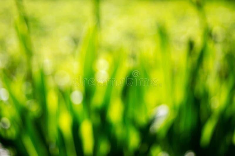 Fondo astratto della natura di stagione estiva o della primavera con erba Foto molle vaga del fuoco immagine stock libera da diritti