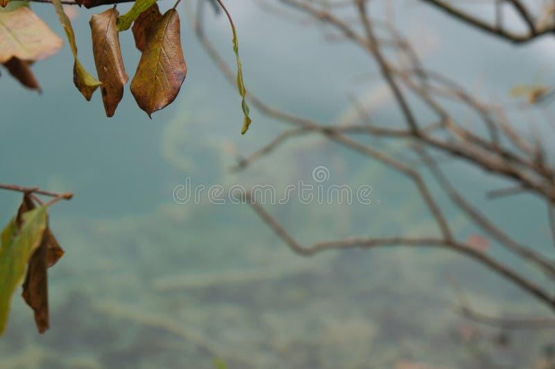 Fondo astratto della natura, vago espressamente, foglie di autunno su priorità alta fotografia stock libera da diritti