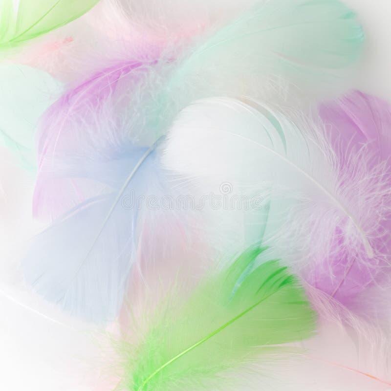 Fondo astratto della rappezzatura dell'arcobaleno della piuma Immagine del primo piano Tendenze di colore di modo immagine stock libera da diritti