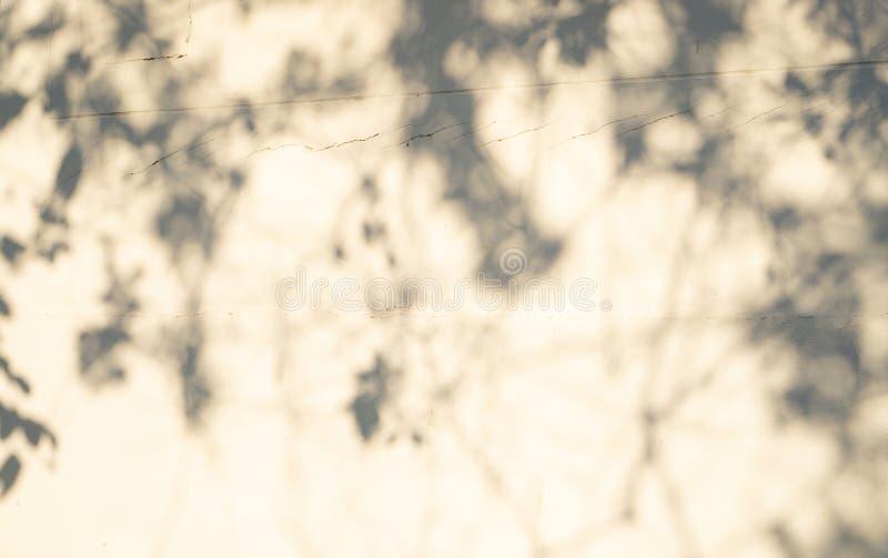 Fondo astratto della sfuocatura, ombra nera vaga delle foglie da un albero sulla parete bianca del cemento di superficie di calce fotografia stock