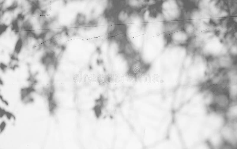 Fondo astratto della sfuocatura, ombra nera vaga delle foglie da un albero sulla parete bianca del cemento di superficie di calce immagine stock