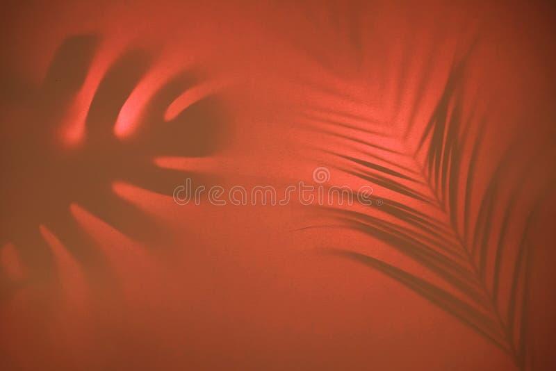 Fondo astratto delle foglie tropicali delle ombre sul contesto pastello in lampadina immagine stock libera da diritti