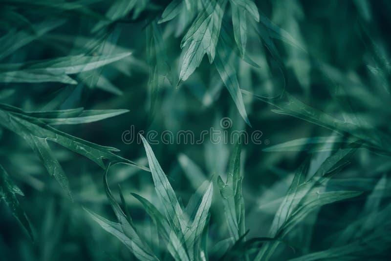 Fondo astratto di struttura delle foglie verdi fotografie stock libere da diritti
