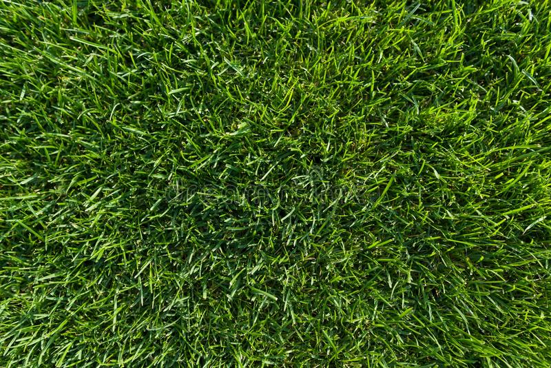 Fondo astratto di struttura, tappeto verde intenso naturale del prato inglese del primo piano dell'erba, vista superiore fotografia stock