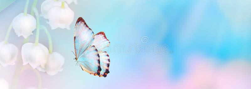 Fondo astratto floreale di colore blu viola Chiuda sul fiore e sulla farfalla rosa dell'universo con lo spazio della copia Stile  fotografie stock libere da diritti
