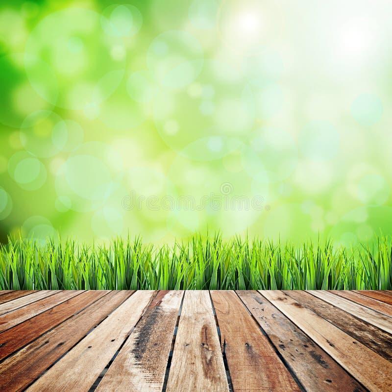 Fondo astratto naturale verde immagini stock