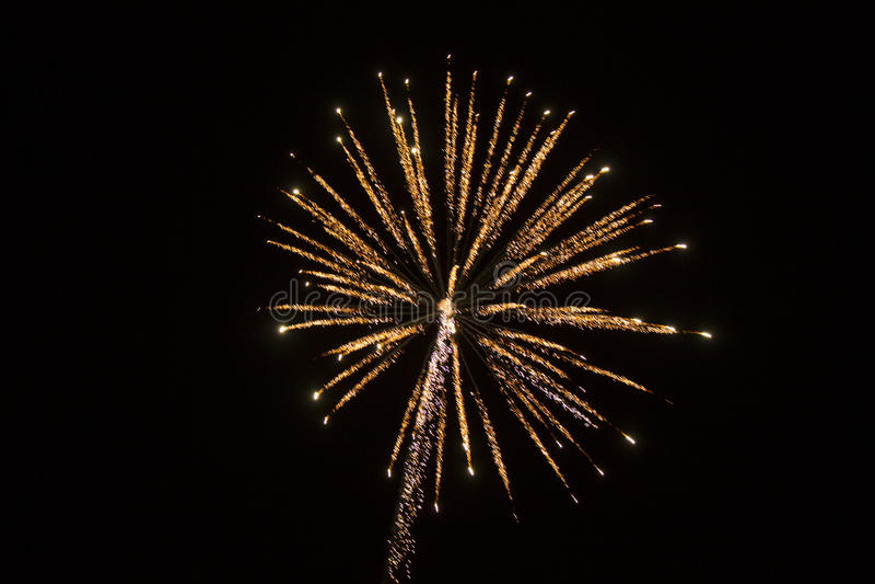Fondo astratto: Rosa dei fuochi d'artificio ed albero della scintilla dell'oro immagini stock libere da diritti