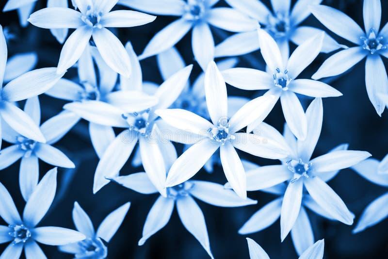 Fondo azul abstracto de la naturaleza con las flores blancas fotografía de archivo libre de regalías