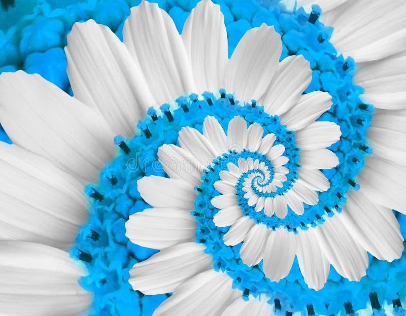 Fondo azul blanco blando del fractal del modelo del efecto del fractal del extracto del espiral de la flor del kosmeya de la marg foto de archivo libre de regalías