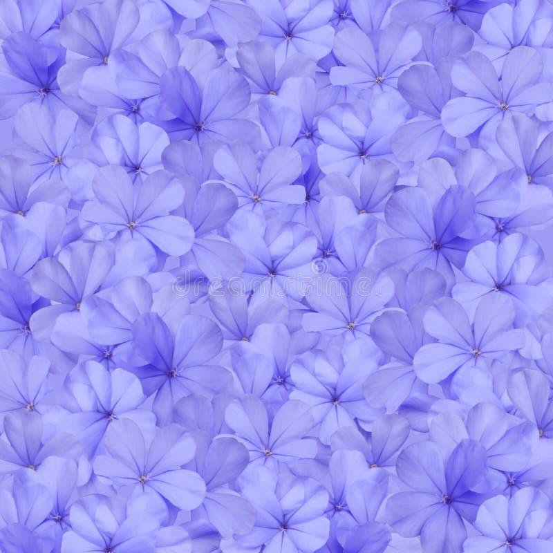 Fondo azul de la flor del grafito imagen de archivo