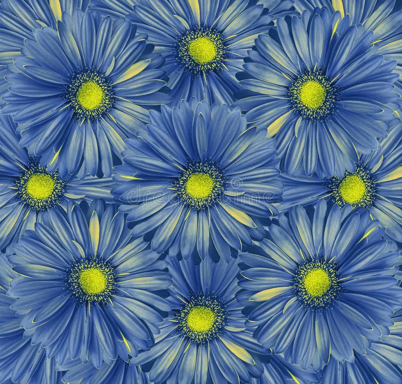 Fondo azul floral Un ramo de flores de gerberas azul-amarillos Primer imagen de archivo libre de regalías