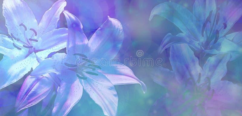 Fondo azul hermoso de Bokeh que se casa Lillies fotografía de archivo libre de regalías