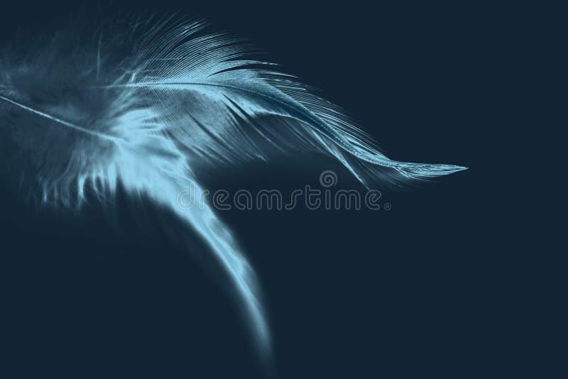 Fondo azul marino con las plumas de pájaro negativas fotos de archivo libres de regalías