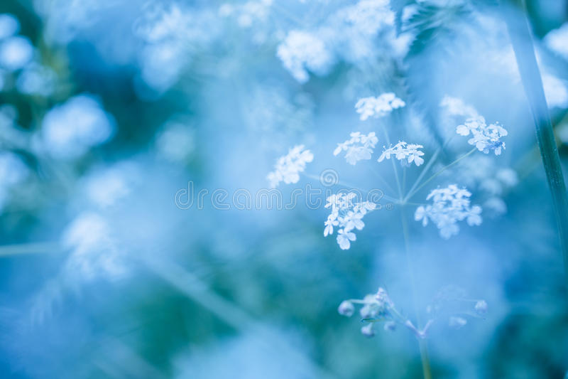 Fondo azul suave de la primavera con los wildflowers fotografía de archivo libre de regalías