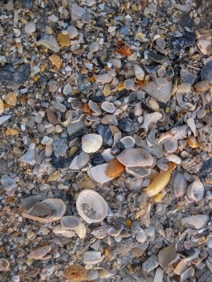 Fondo azul y gris de conchas marinas imágenes de archivo libres de regalías